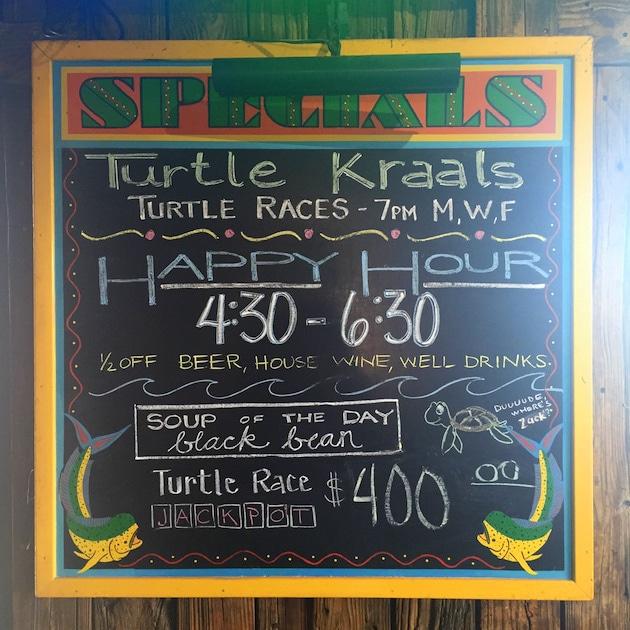 Turtle-racing-happy-hour